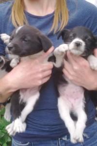 Sandy's pups 2