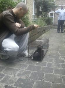 Jervis place cats