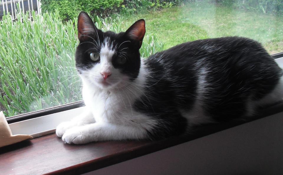 Taylor-cat