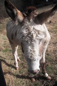 donkey-sml