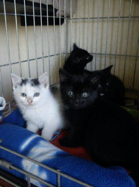 ballymun kittens