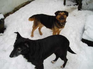 lady-tramp-dogs