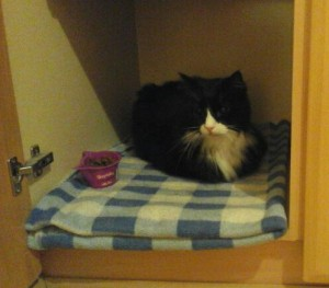 Marty the blind cat sitting on a cosy blanket with food