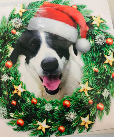 dog-christmas-card