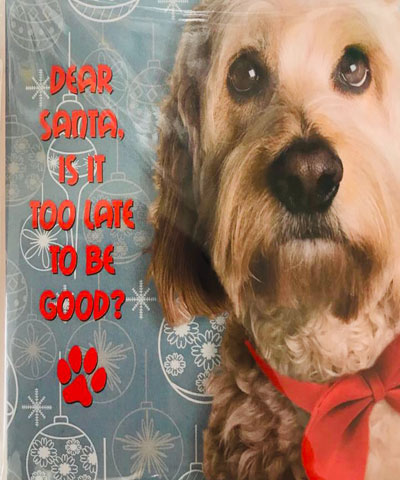 dog3-christmas-card